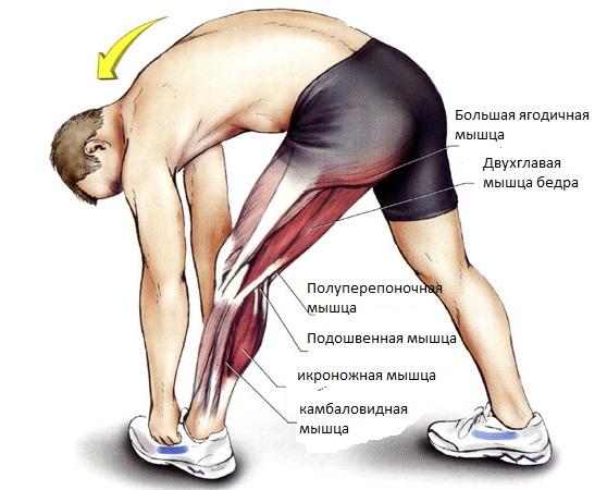 Растяжение мышц тазобедренного сустава симптомы эндопротезы крупных суставов рб