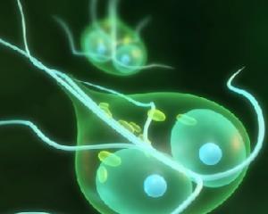 Лямблиоз: симптомы у взрослых, лечение, признаки