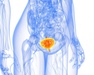 Воспаление мочевого пузыря у женщин - симптомы и лечение