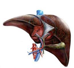 Дискинезия желчевыводящих путей - симптомы и лечение