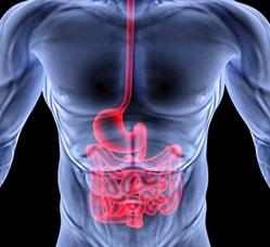 Гастроэнтерит - симптомы и лечение у взрослых