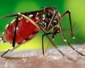 Малярия - симптомы и лечение, профилактика