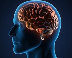 Серозный менингит - симптомы у взрослых, лечение